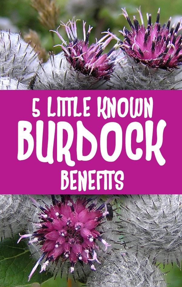5 Amazing Health Benefits of Burdock