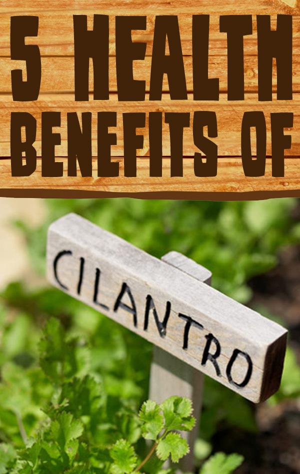 5 Fantastic Health Benefits of Cilantro