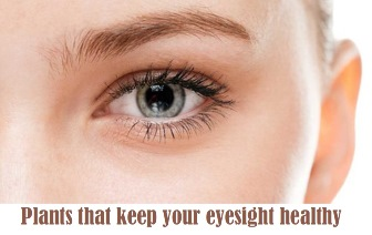 Plants that keep your eyesight healthy