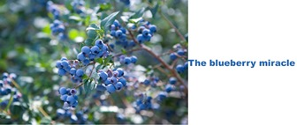 The blueberry miracle
