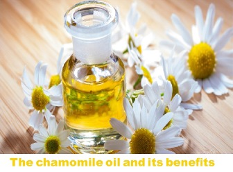 The chamomile oil and its benefits